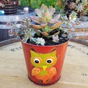 TODAY SPECIAL Owl Medium size planter